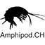 Amphipod.CH