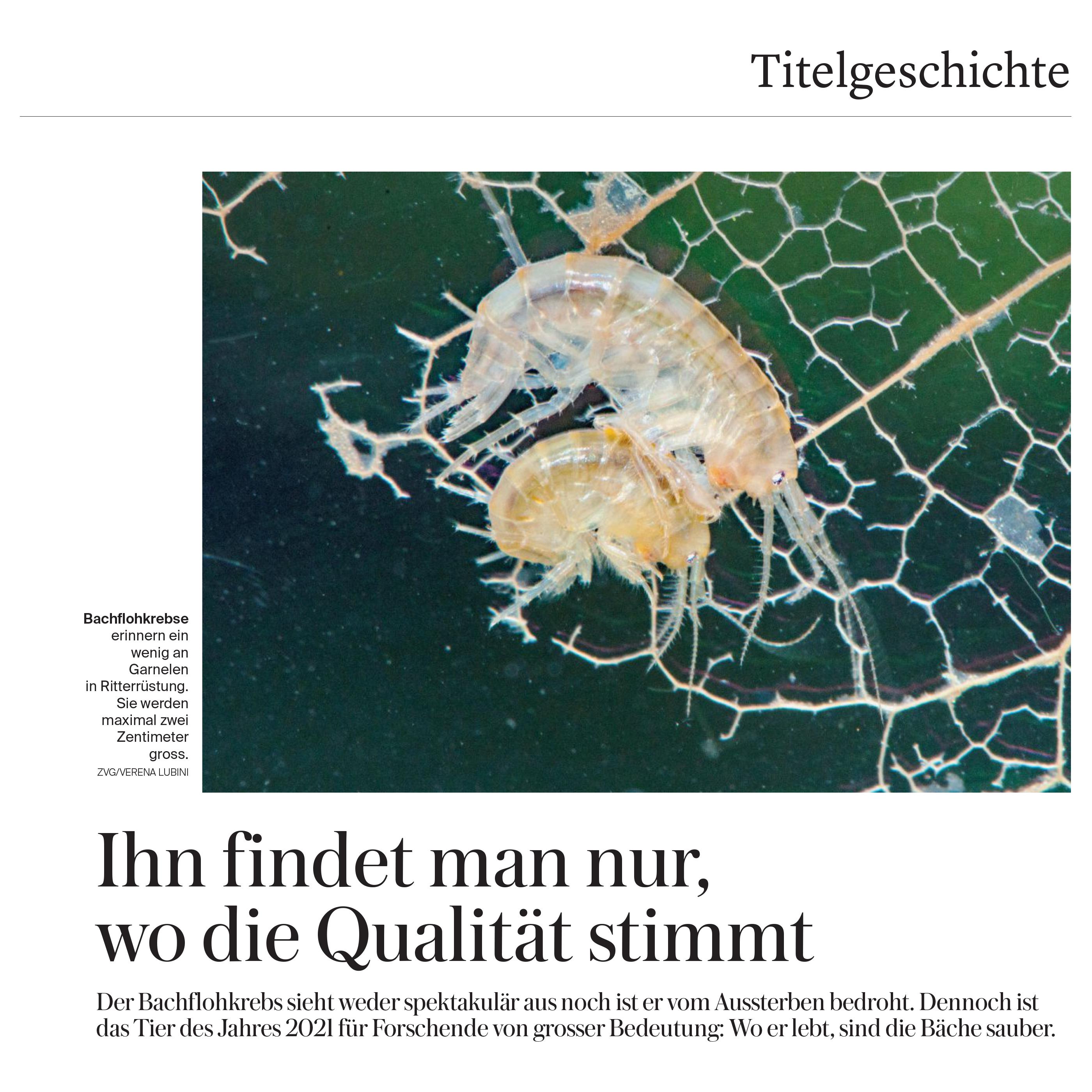 BielerTagblatt